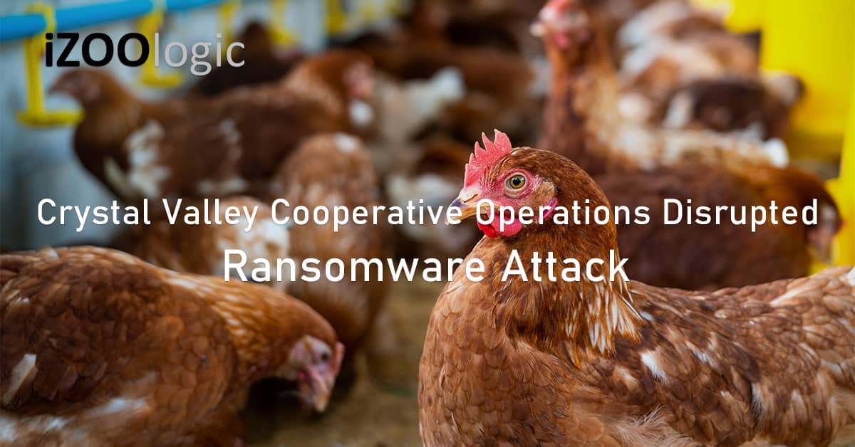 Daily operations disrupted ransomware attack Crystal Valley Cooperative